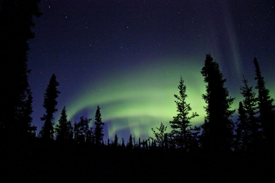 Northern Lights in the sky over an arctic forest