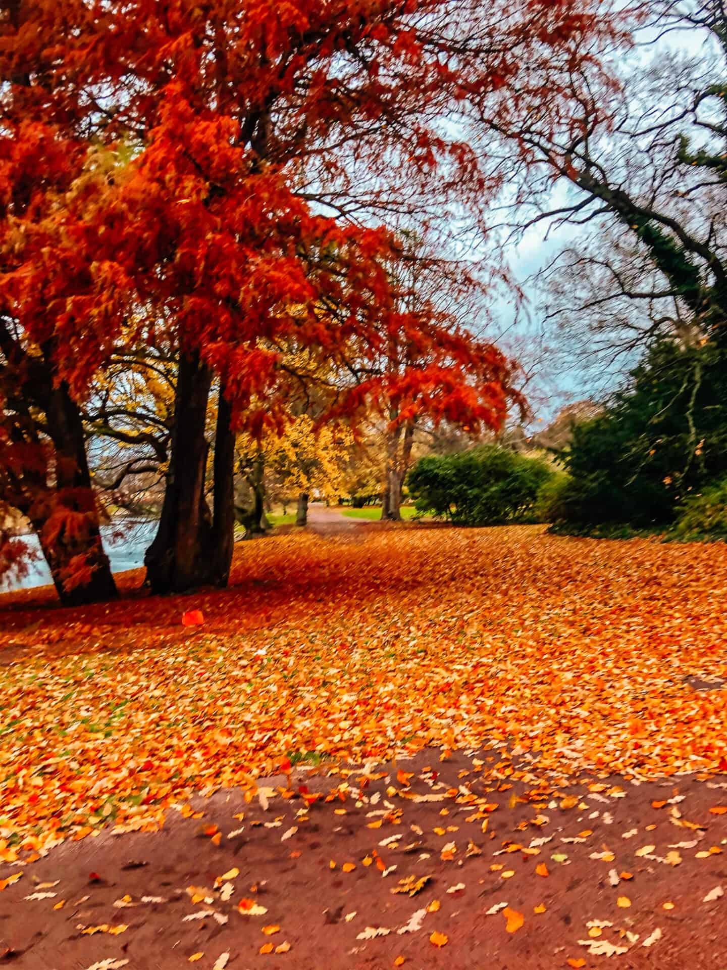 Autumn leaves on the trees and the footpath of a park