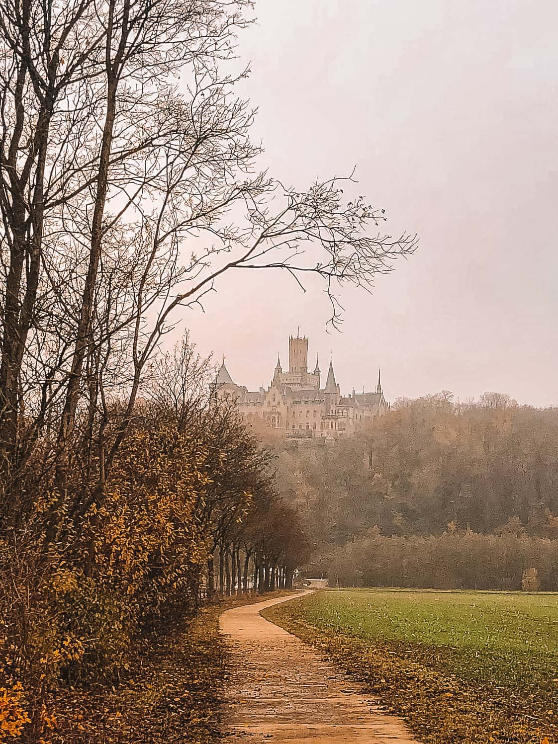 A footpath lined with trees and a castle on a hill in the distance