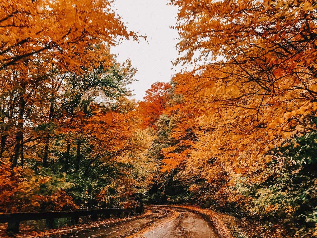A road lined with trees covered in autumn leaves