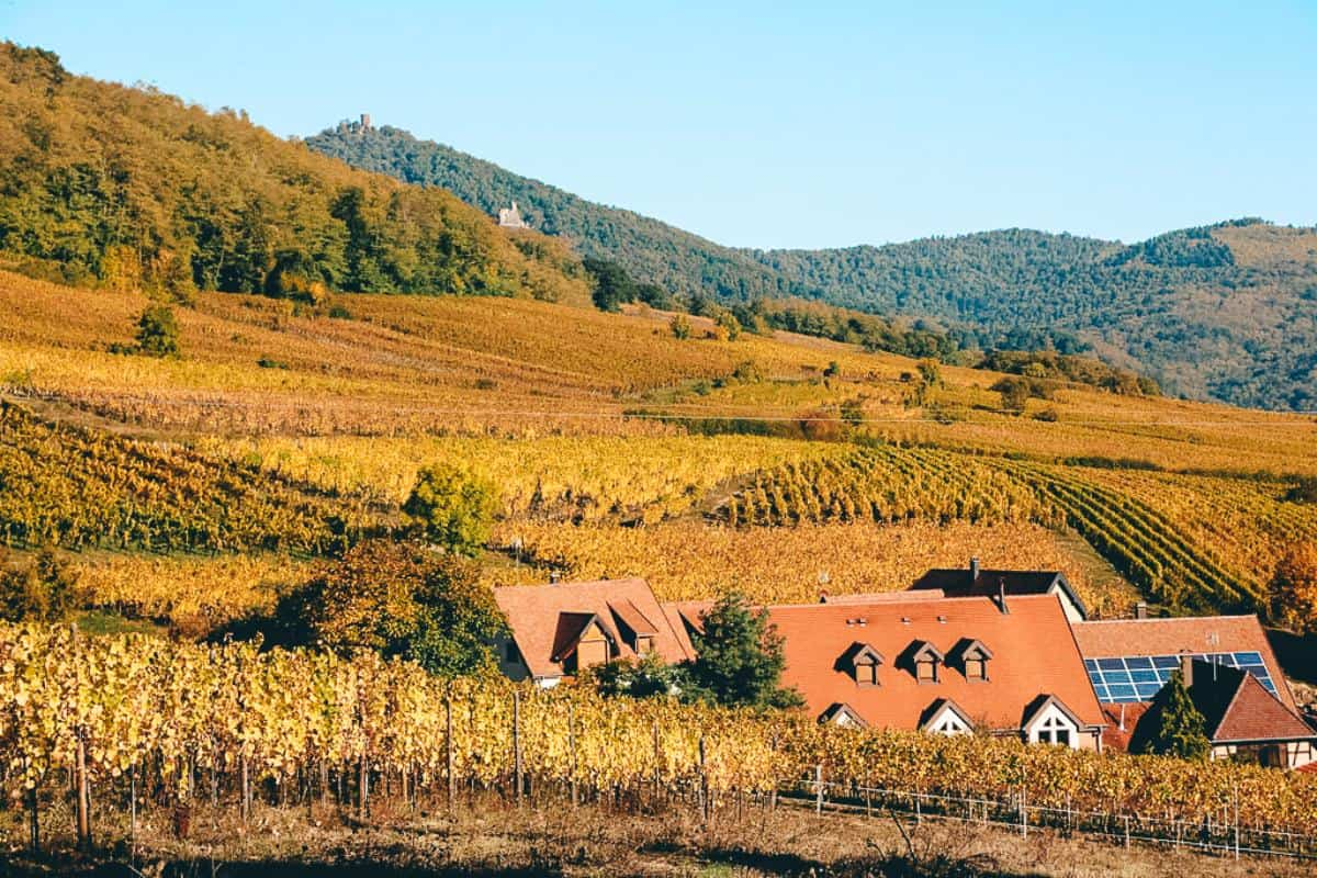 A house in the middle of a vineyard