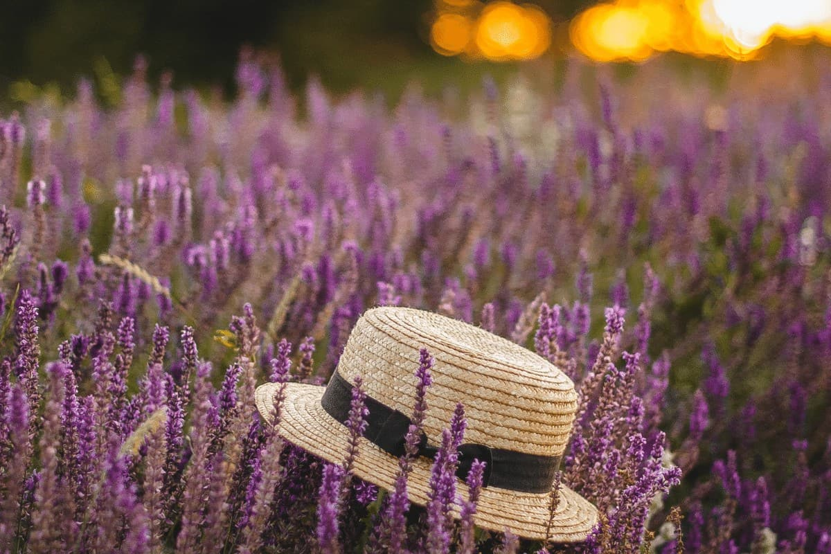A hat sitting in the lavender with the sun fading in the background