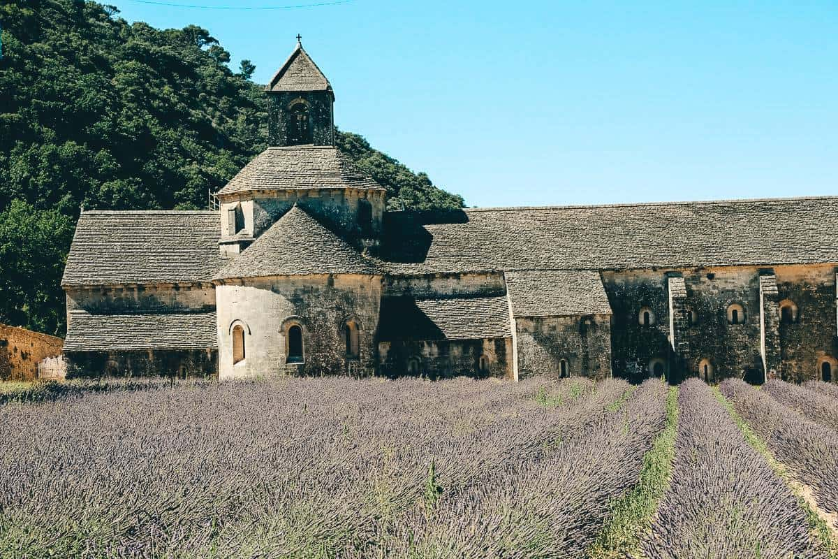 Rows of Lavender outside an old abbey