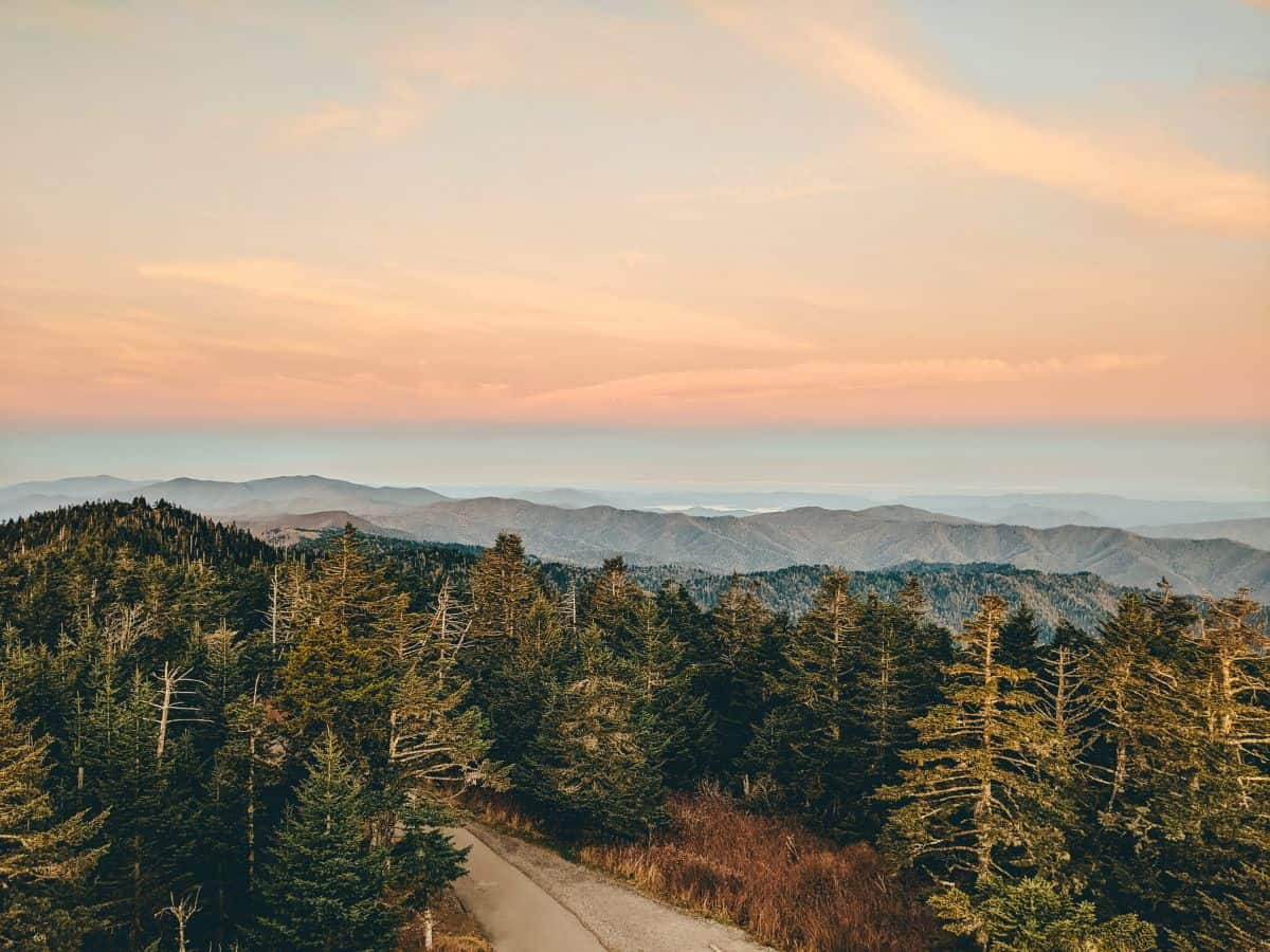 Pink clouds over a road surrounded by tall pine trees with mountains in the background