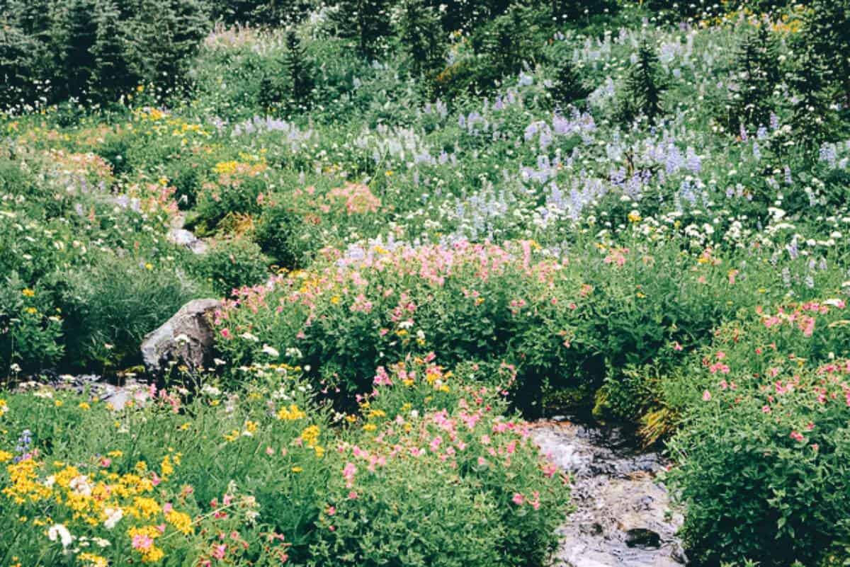 Wild flowers surrounding a stream