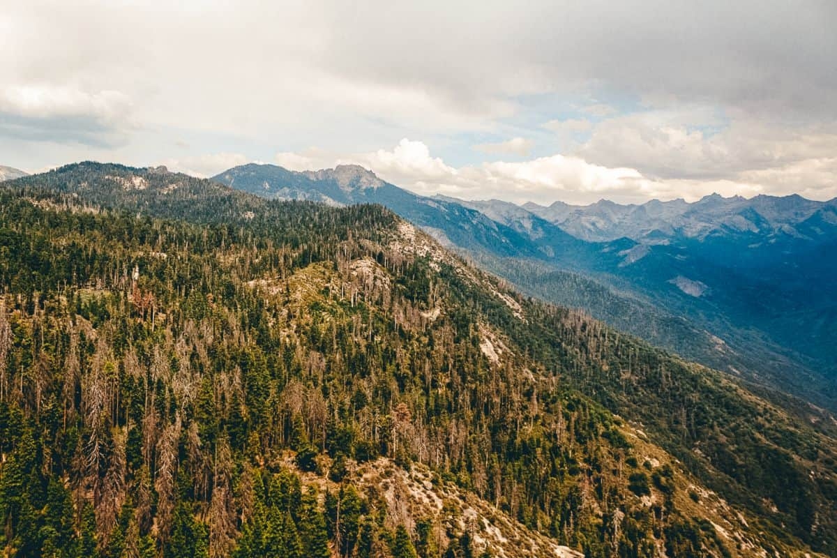 A view over the sweeping hills of Sequoia