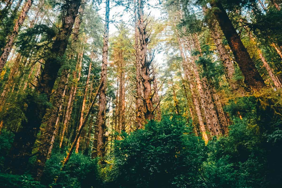 A forest full of thick green trees