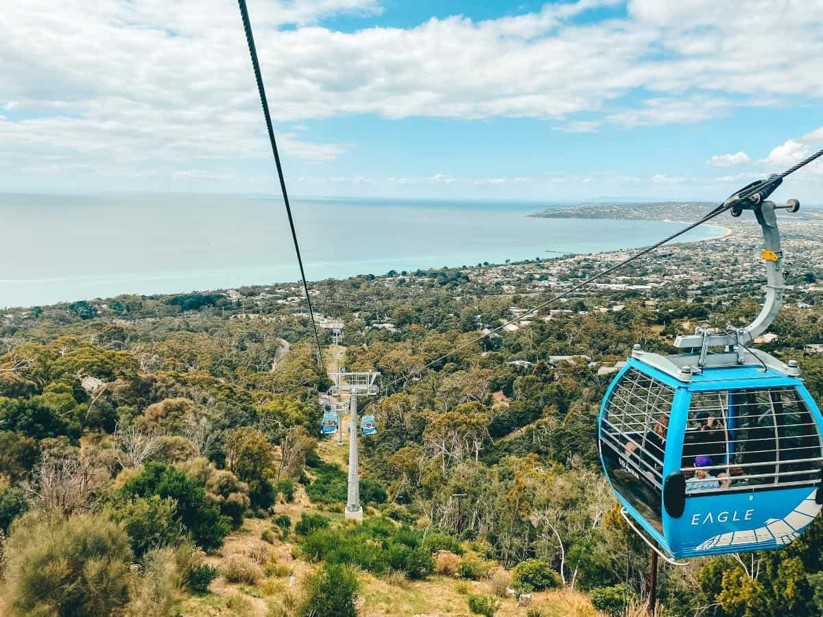 A view of gondolas high above a forest overlooking the ocean