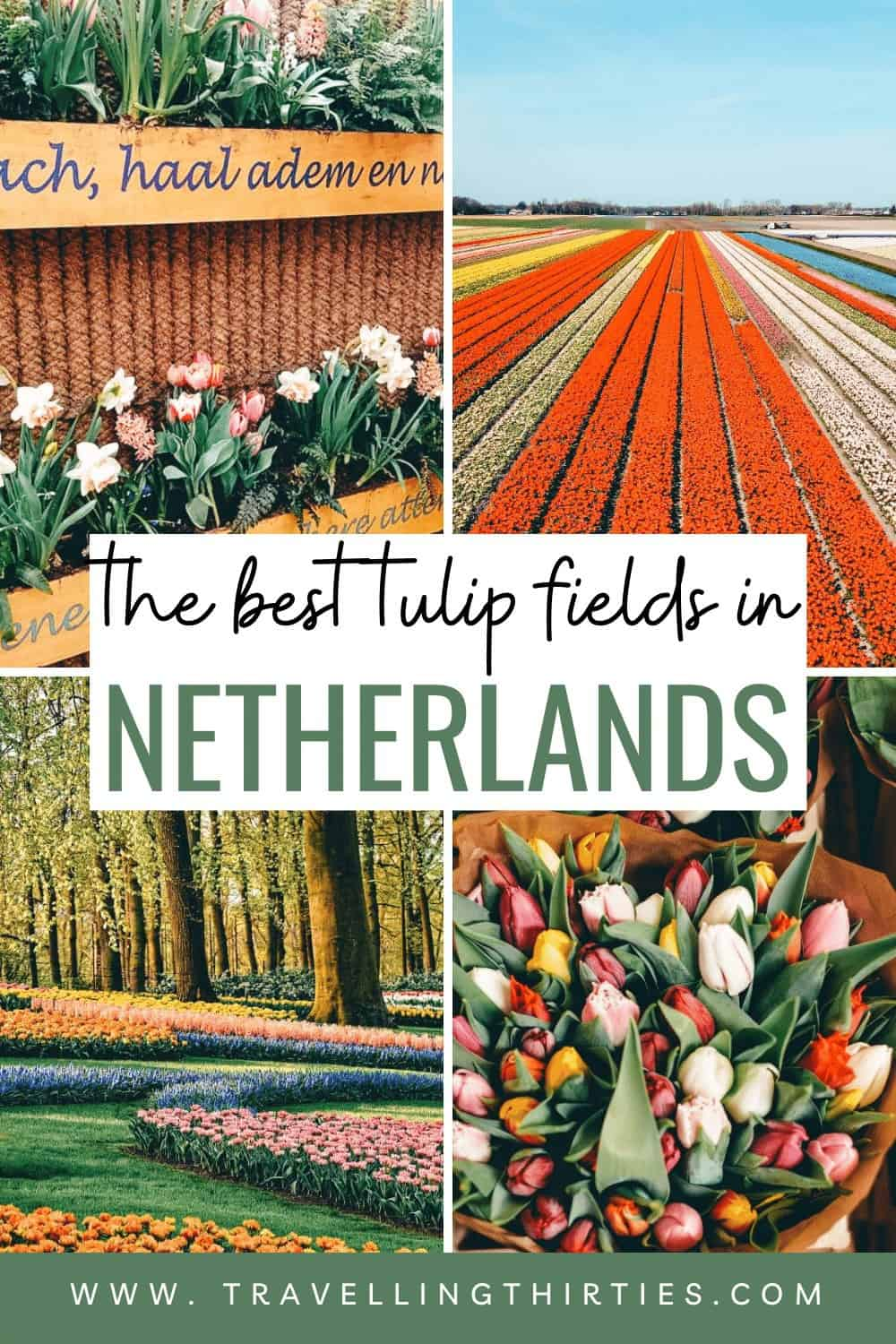 Pinterest Graphic for the tulip fields in the Netherlands