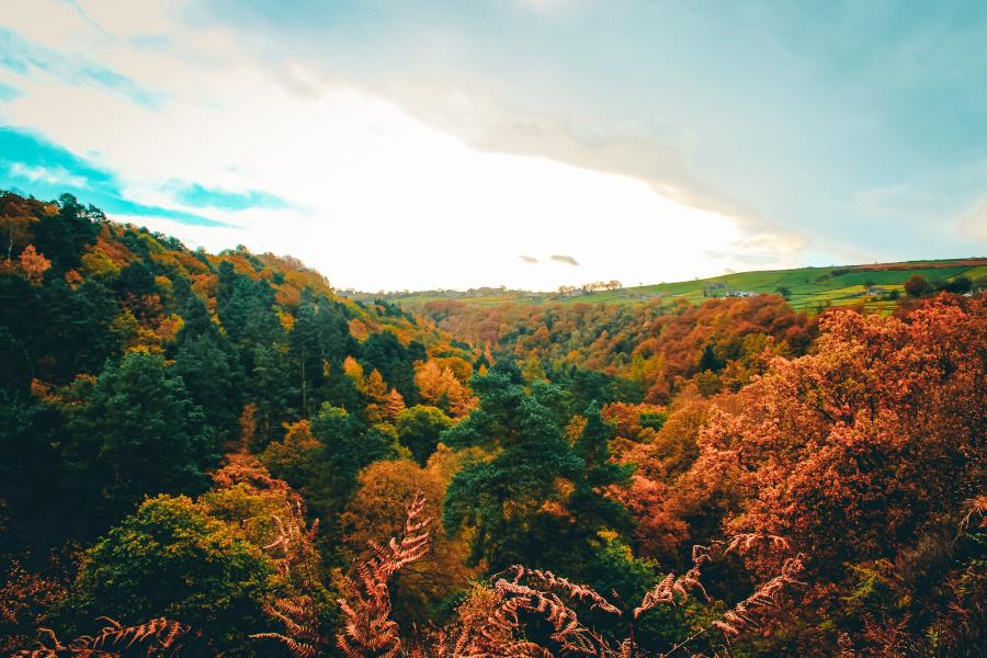 A view over trees covered in autumn leaves