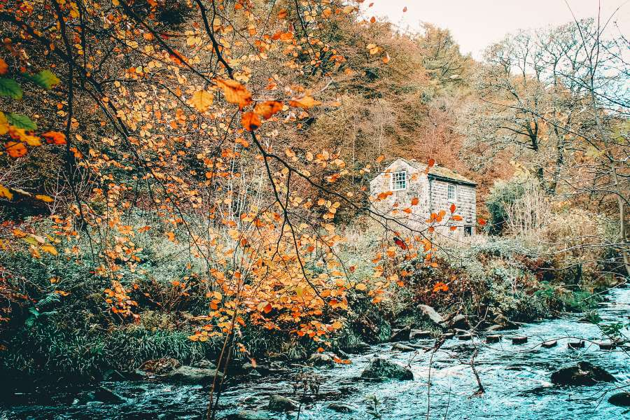 Autumn leaves framing a building on the side of a river in Yorkshire