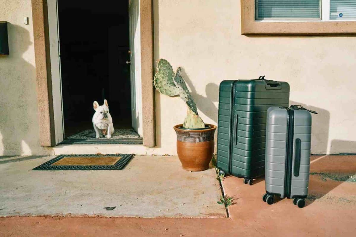 Two away suitcases outside with a dog in the doorway