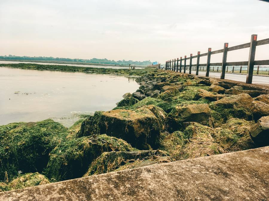 Moss covered rocks next to the water
