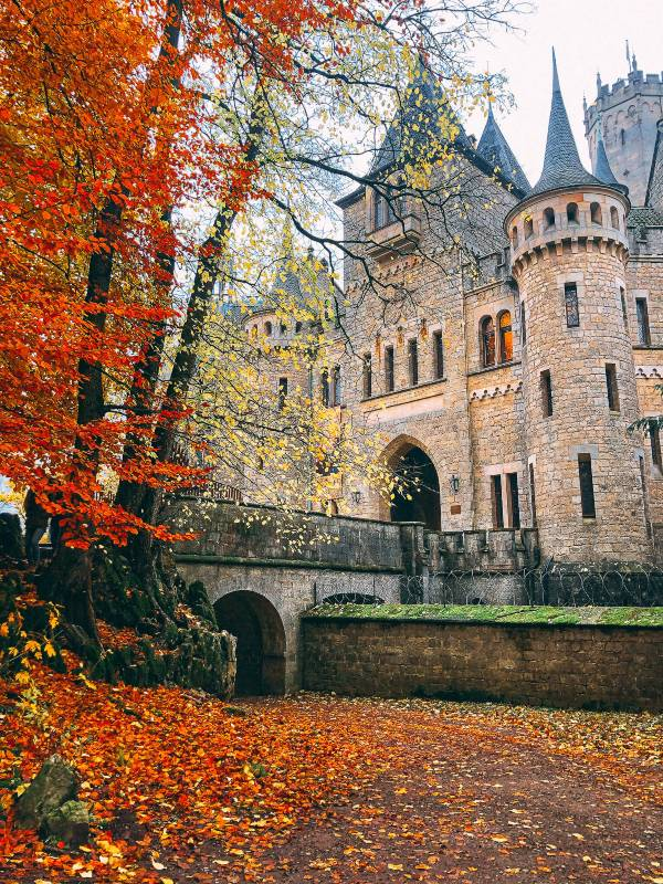 Autumn leaves next to the bridge leading into the castle
