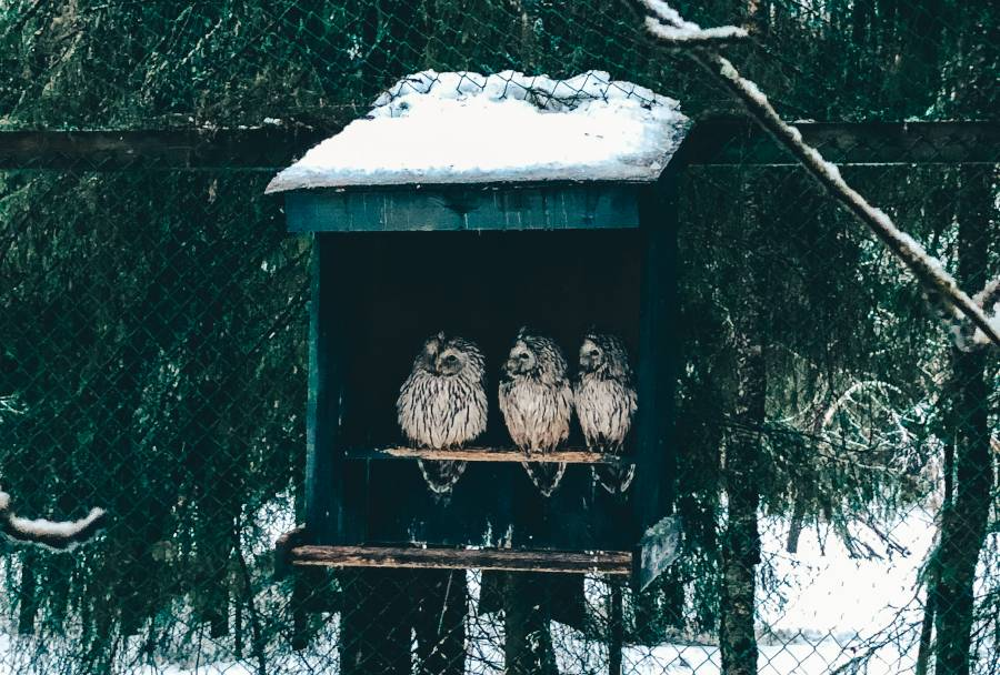 Three owls sitting inside a green box on a fence surrounded by snow