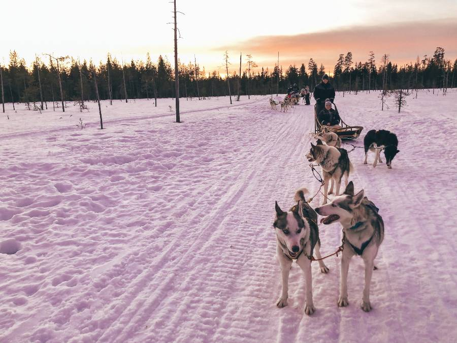 Huskies attached to a sleigh in the snow with the sun setting in the back ground