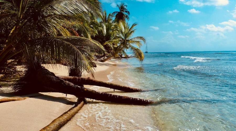 Palm on a desserted beach
