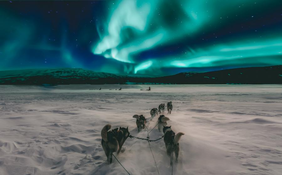 Huskies running in the snow under a sky full of northern lights