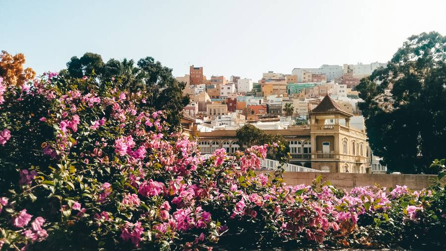 View of San Juan through some colourful flowers