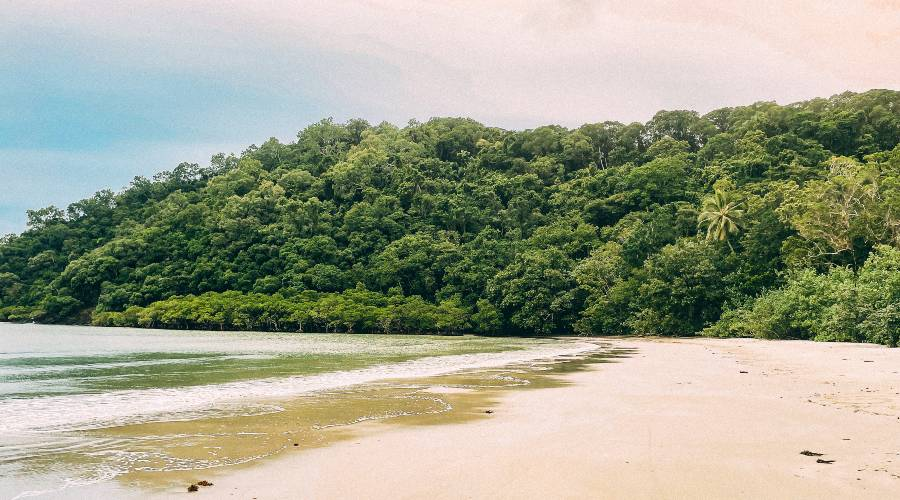 The Ultimate Itinerary for 2 days in Cape Tribulation Queensland