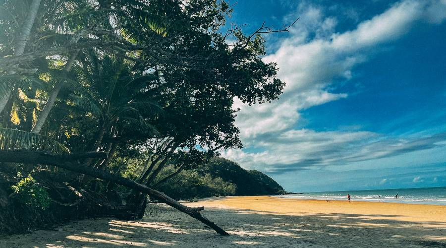 The beach at cow bay in Cape Tribulation Queensland