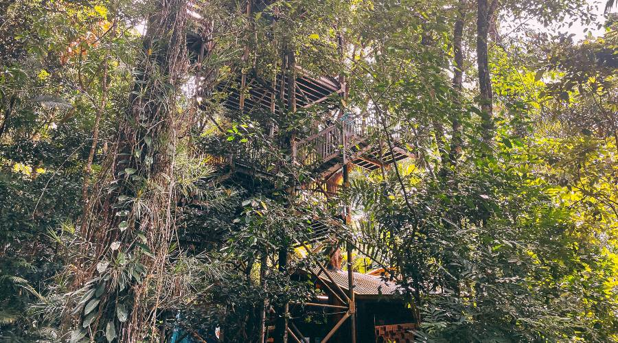 Canopy Tower at the Daintree Discovery Center