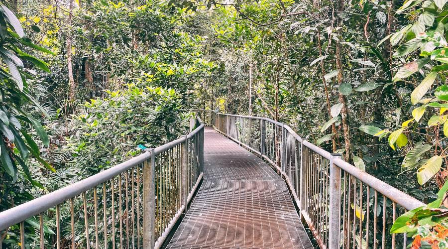 A wire walkway running through the rainforest