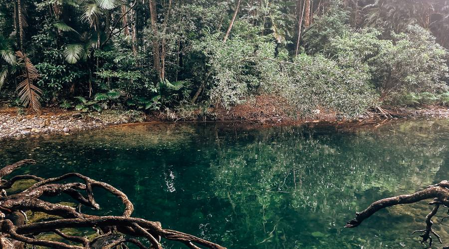 The bright green swimming hole of Emmagen Creek